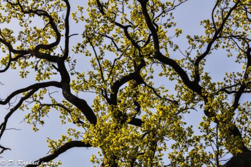 branches-arbres-divers-photographie-aerienne-par-drone-prisedevueaerienne