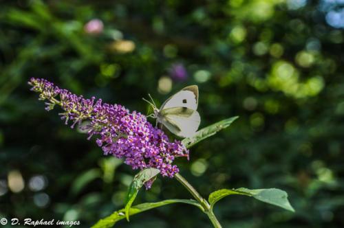 fleur-divers-photographie-aerienne-par-drone-prisedevueaerienne