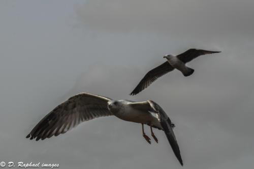 oiseaux-divers-photographie-aerienne-par-drone-prisedevueaerienne