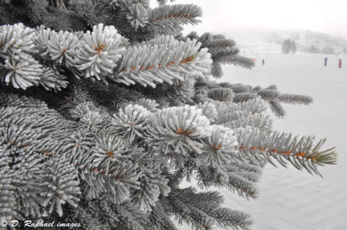 sapin-neige-divers-photographie-aerienne-par-drone-prisedevueaerienne